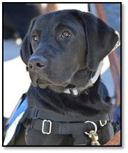guide dogs 2